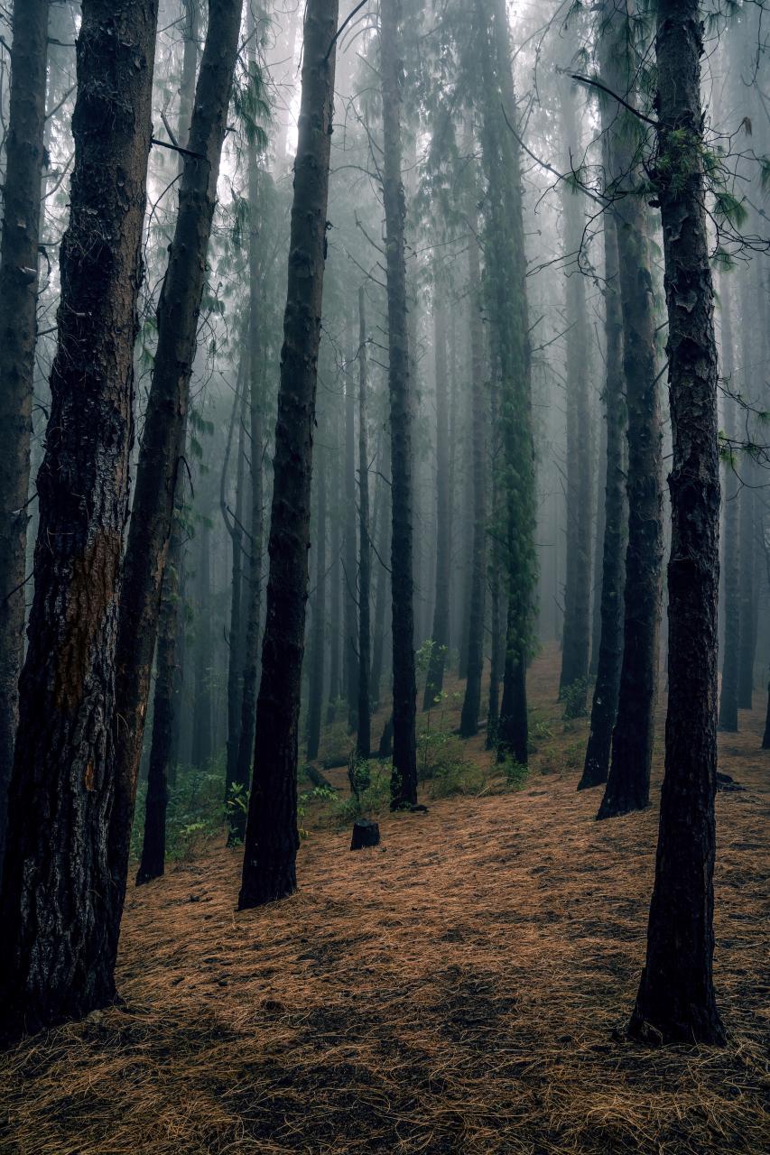 صور اشجار رائعة خلفيات شجر للجوال والكمبيوتر