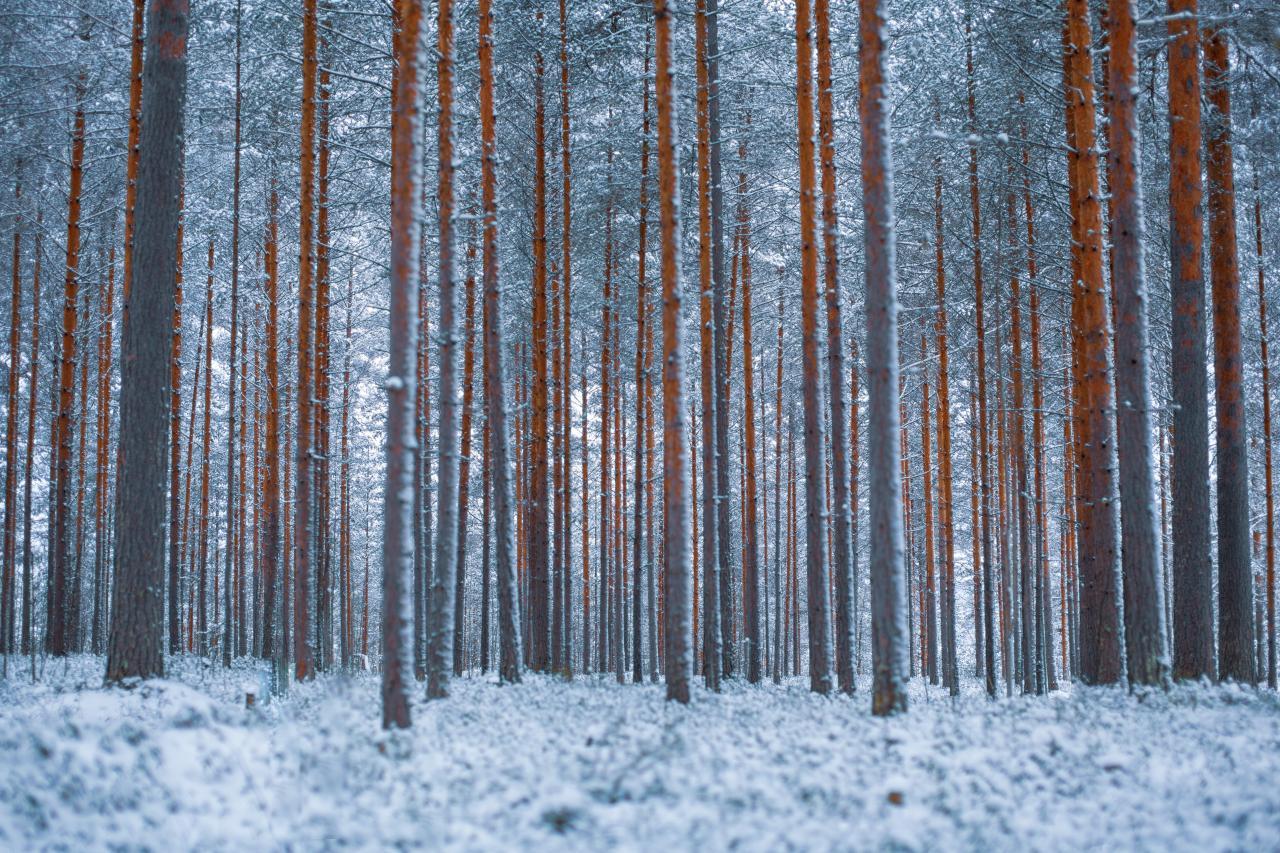 صور شتاء رائعة خلفيات الشتاء والبرد للجوال والكمبيوتر